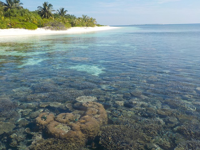 Maldiverne 4