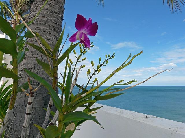 orchids-946549_640