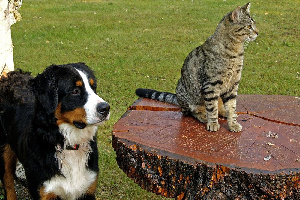 Pasning af kæledyr mens man er på farten